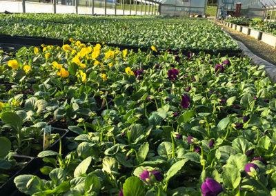 Pritchett Farms Nurseries